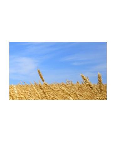 Curso básico online de Derecho Agrario y Alimentario